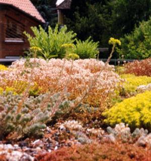 Ein begrüntes Dach mit gelben- und rosafarbenen Pflanzen