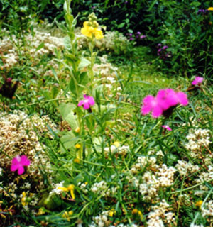 Blumen in Violett und Gelb