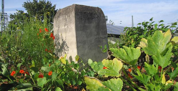 Ein begrüntes Firmendach mit Pflanzen und einem dekorativen Stein