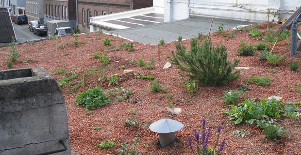 Ein begrüntes Firmendach mit Pflanzen