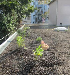Pflanzen auf einem begrünten Flachdach