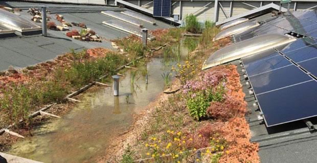 Ökologisiertes Dach
